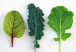 Swiss Chard Kale