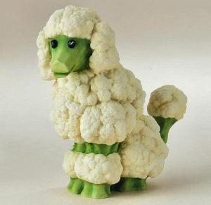 Cauliflower broccoli dog
