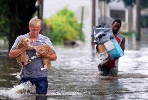 Hero Rescue Cat