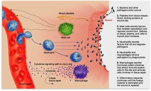 Inflammation Process