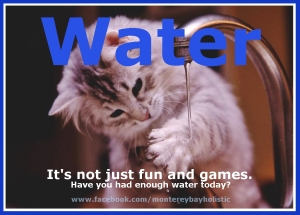 Cat Plays with Water