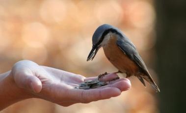 Person Feeding Bird