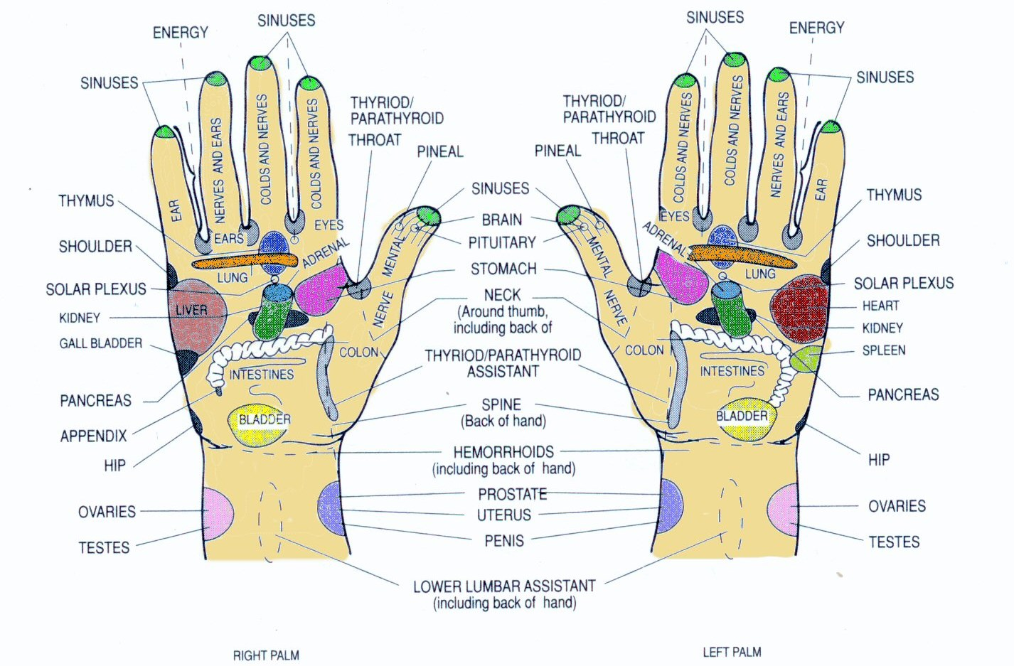 Hand and Foot Reflexology Meridians – What are they and how do you ...