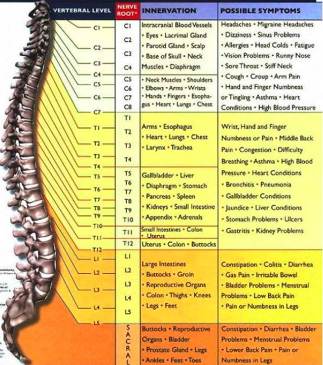 What is Subluxation? How does it affect the body ...