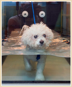 Aquatic Therapy or Hydrotherapy for Pets - The Miracle of Water ...