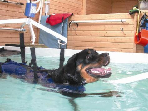 Hydrotherapy dog
