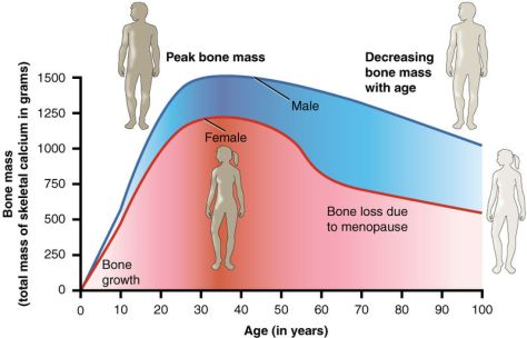 Bone Mass and Age