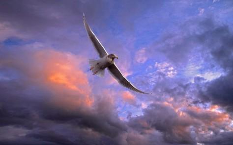 Bird soar sky