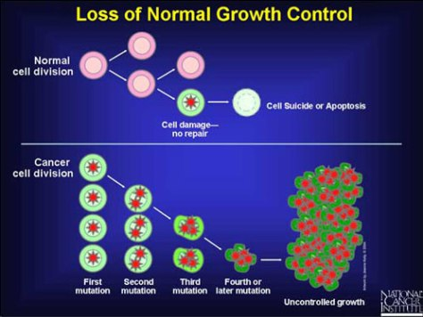 Cancer Loss of Normal Growth