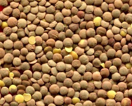 Lentils Legumes