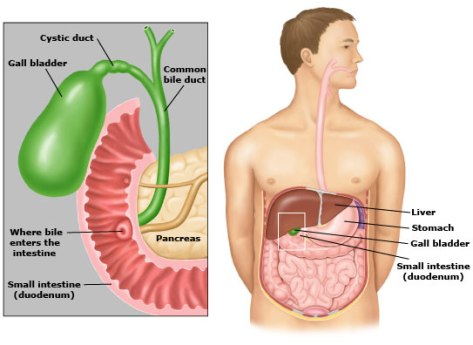 gallbladder disease symptoms and treatment | monterey bay holistic, Human body