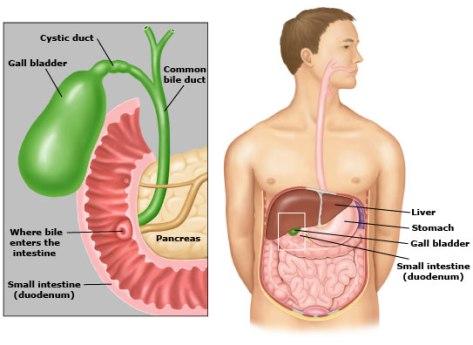 gallbladderanatomypicture1