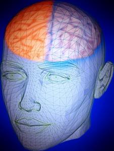 brain face web